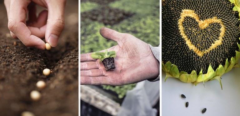 Planting-Seeds crop.jpg